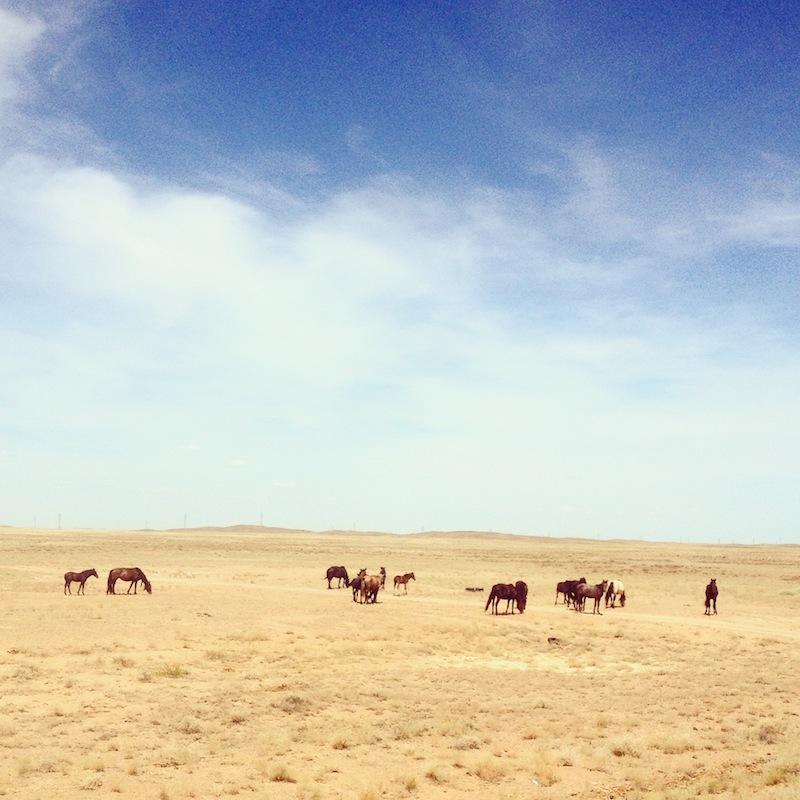 Hevosia pellolla.