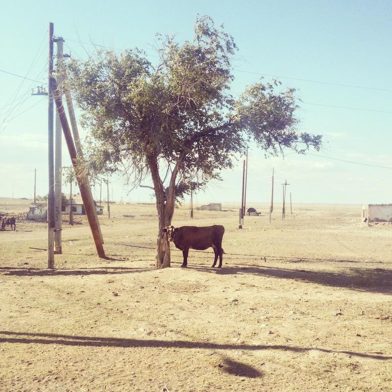 Kylässä lehmillä oli ruoka vähissä.